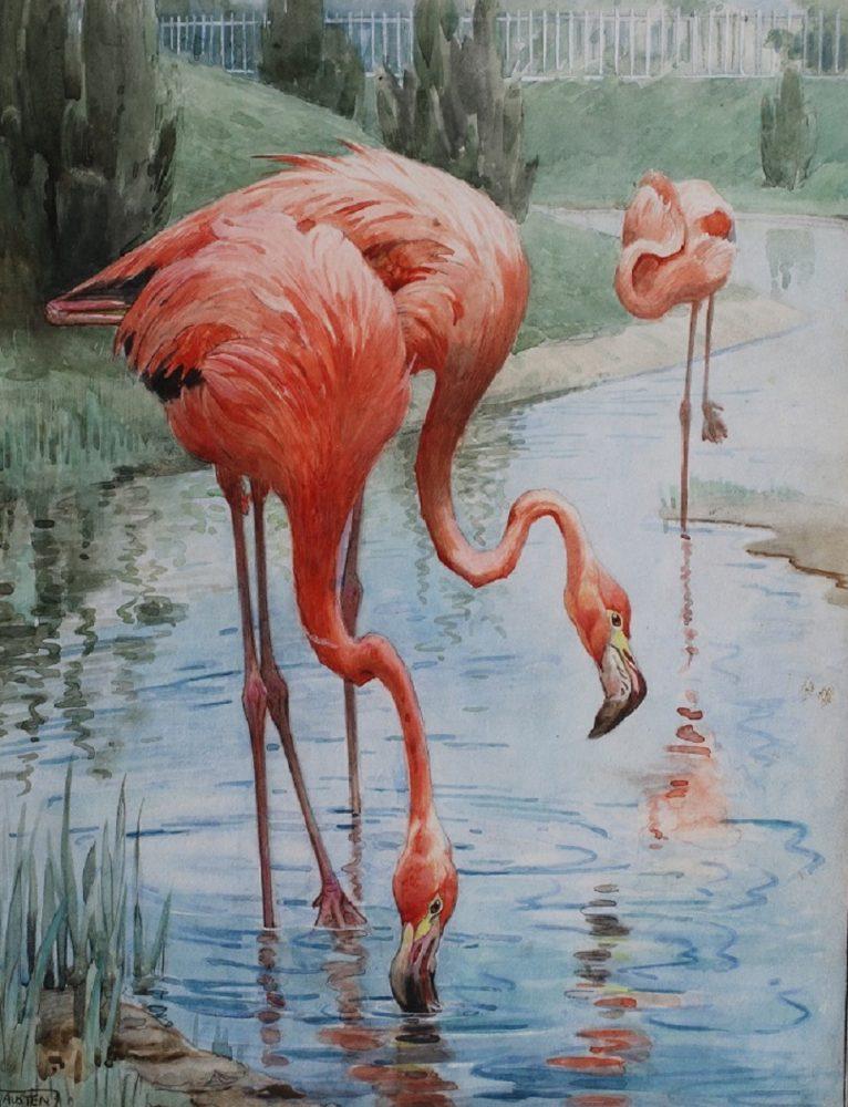 Flamingos Feeding at the Zoo Winifred Austen
