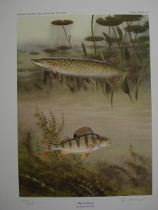 Pike and Perch - Limited Edition print No. 62 by Rodger McPhail
