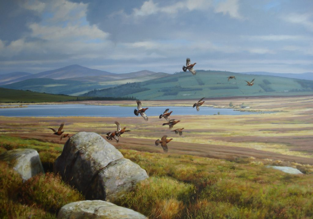 A Covey of Red Grouse Alighting - R McPhail - Oil on Canvas