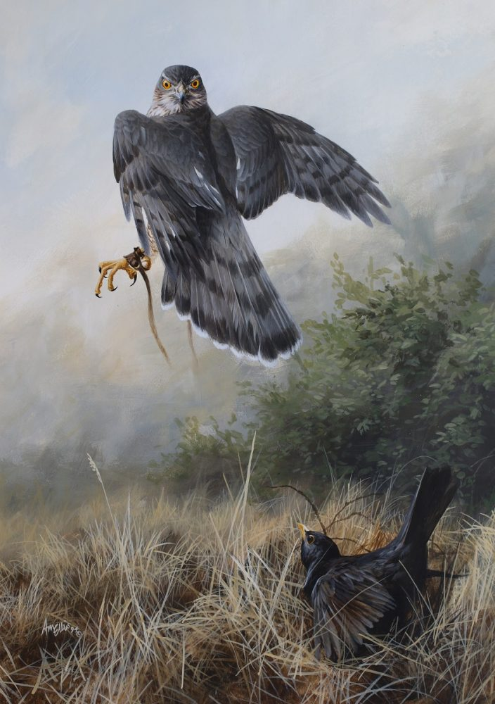 Blackbird v Sparrow Hawk by Andrew Ellis - Acrylic