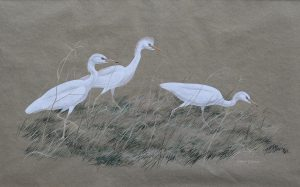 Three Cattle Egrets Robert Gillmor