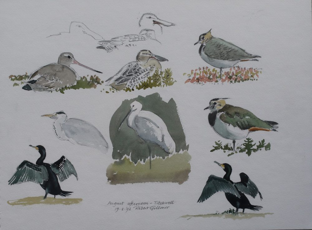 Afternoon at Titchwell - Robert Gillmor - Watercolour