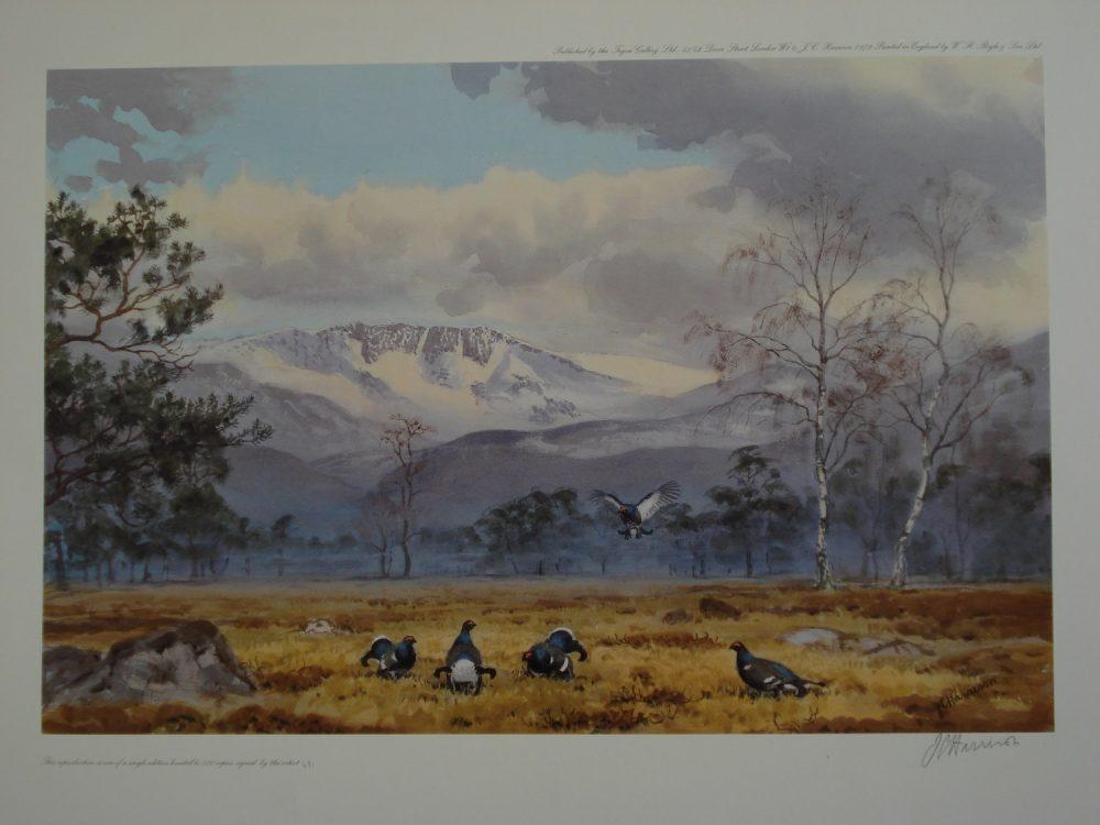 Black Grouse - John C Harrison - Limited Edition Print