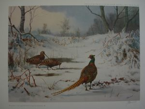 Woodcock & Pheasant by John Cyril Harrison