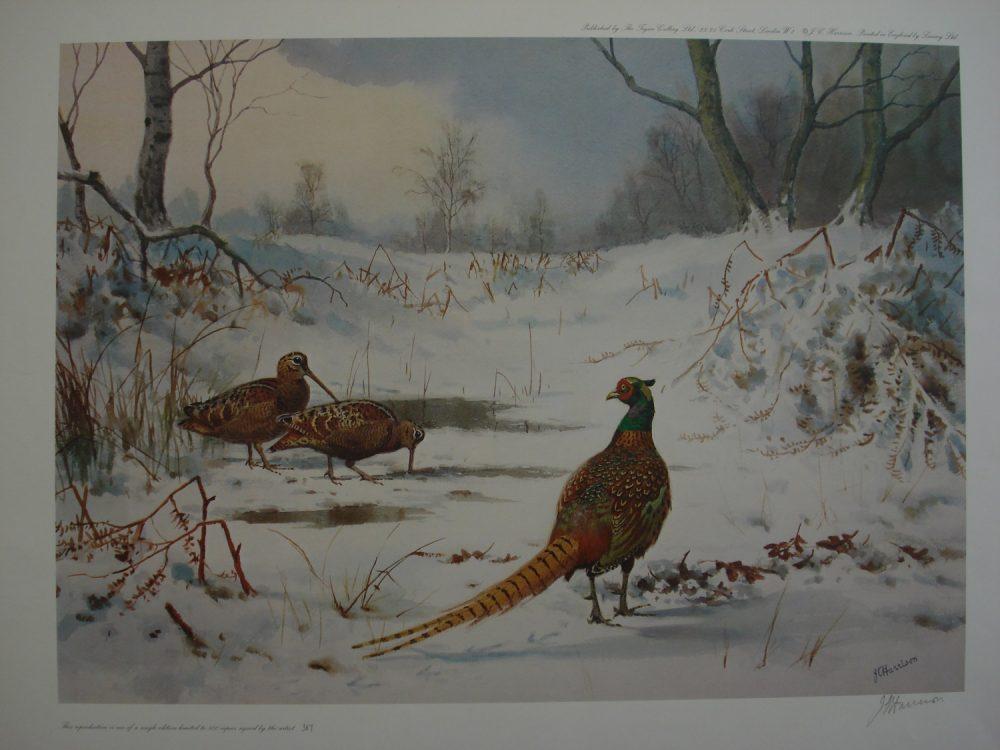 Woodcock & Pheasant - John C Harrison - Single Edition Print