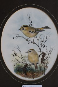 Two Goldcrests sitting on branches Peter Hayman