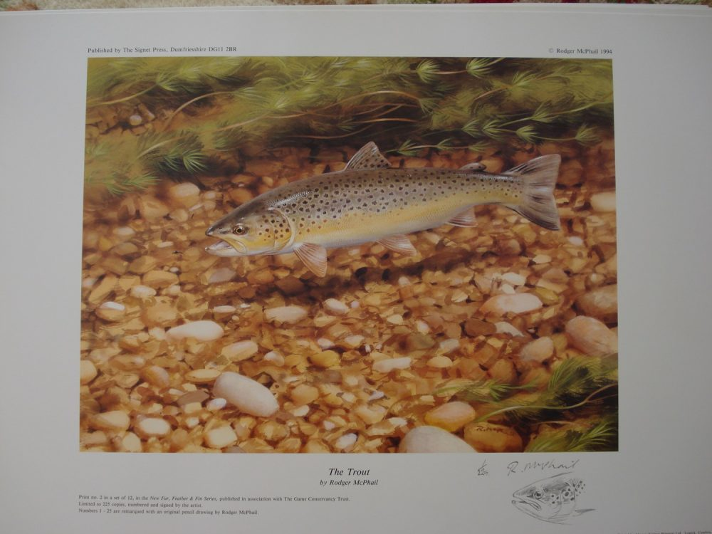 The Trout - Marqued Print - Rodger McPhail