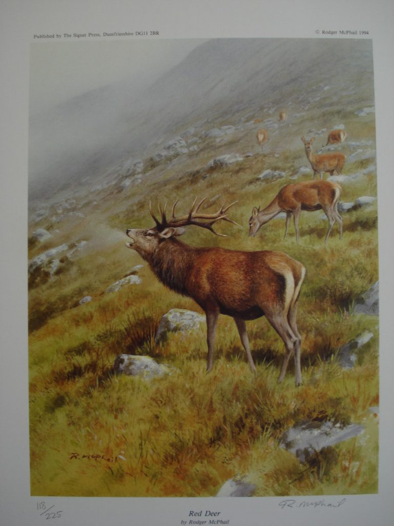 Red Deer - Rodger McPhail - Print