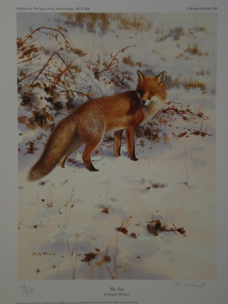 The Fox - Rodger McPhail - Print