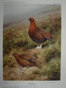 The Grouse Rodger McPhail