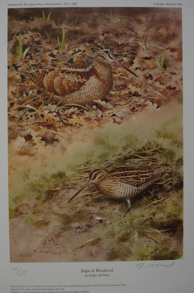 Snipe and Woodcock - Rodger McPhail - Print