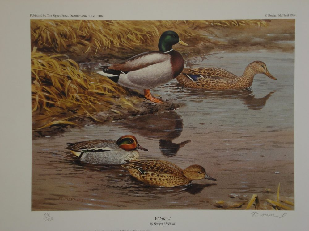 Wildfowl - Rodger McPhail - Limited Edition Print