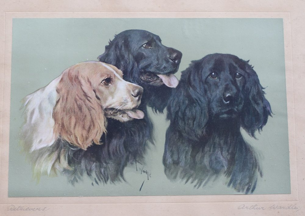 Retrievers by Arthur Wardle - Print