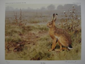 Hare – Limited Edition Print Rodger McPhail