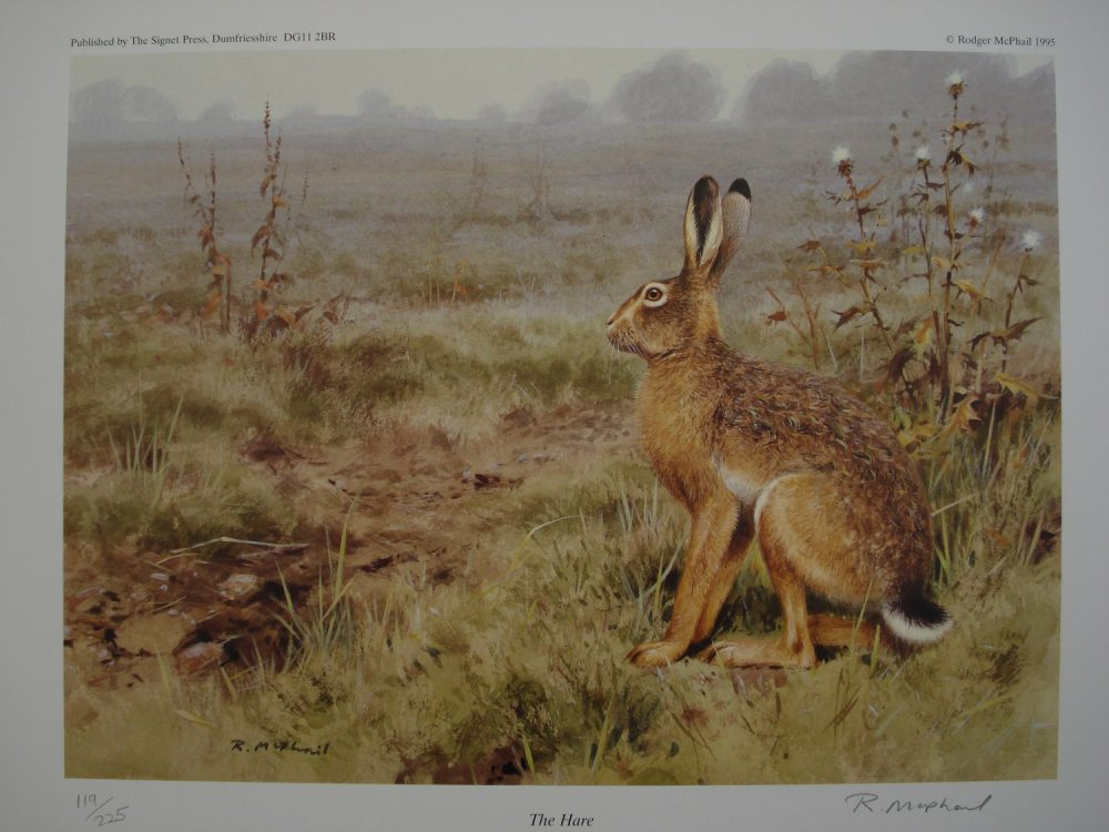 Hare - Limited Edition Print - Rodger McPhail