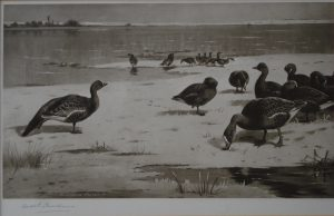 Limited Edition Print , Unapproachable Geese by Archibald Thorburn