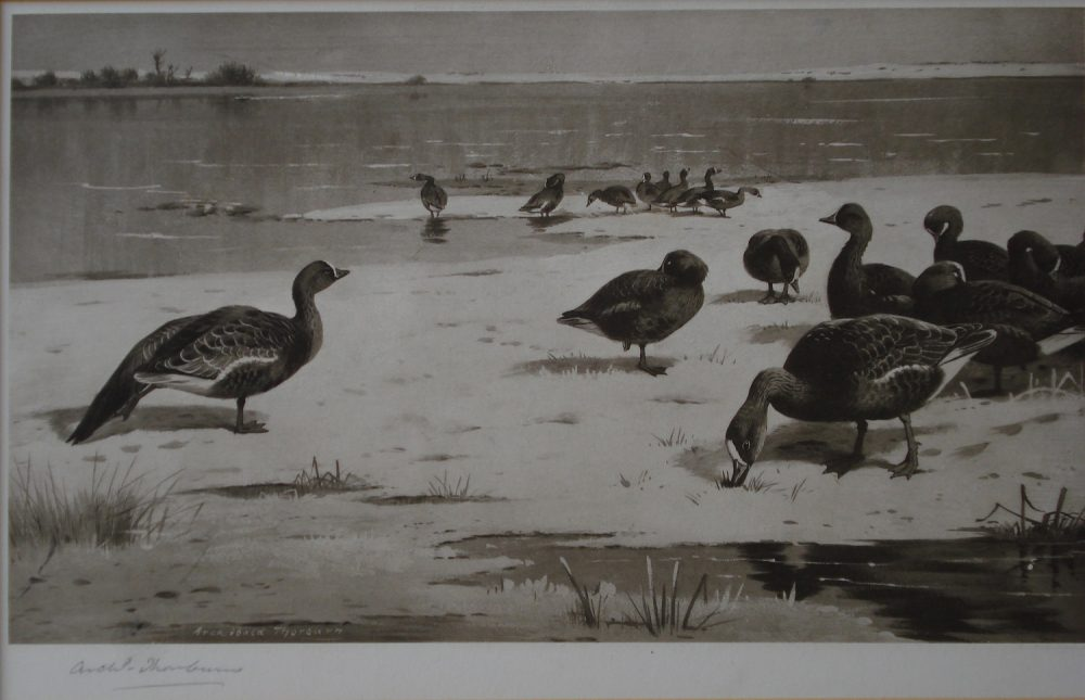 Unapproachable Geese - Archibald Thorburn -Limited Edition Print
