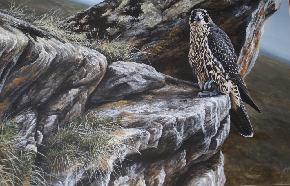 Young Gyr at Rest - Andrew Ellis - Acrylic