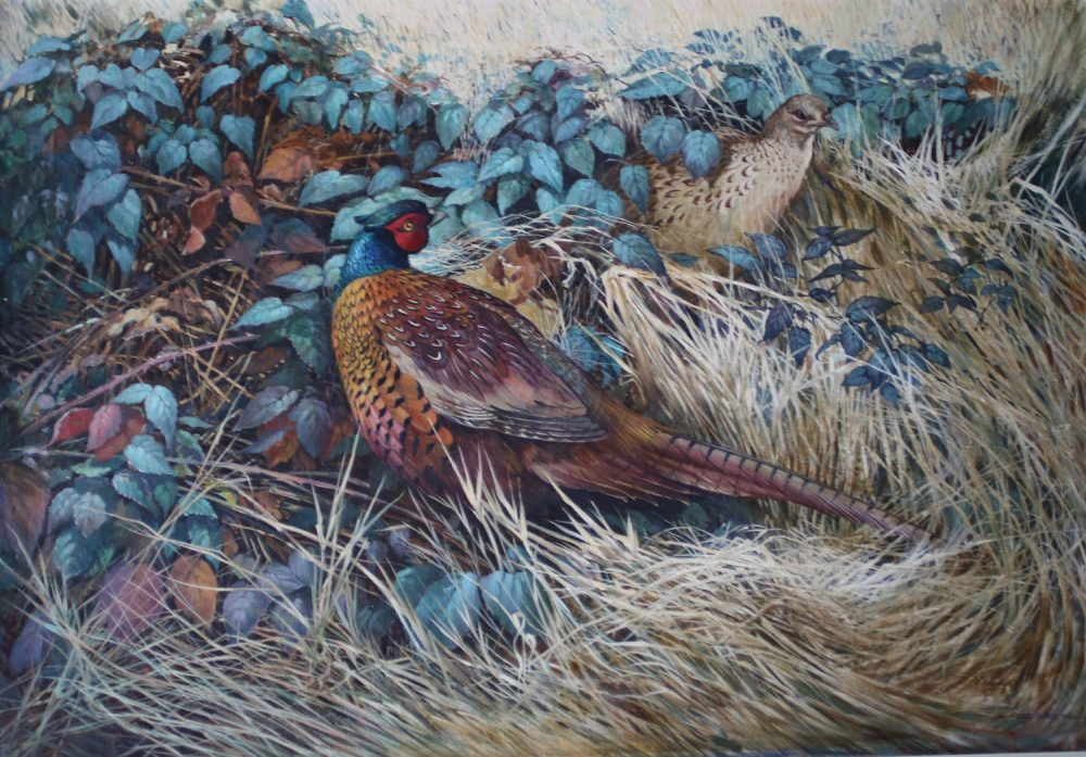 Pheasants in the Undergrowth - Beresford Hill - Oil on Canvas