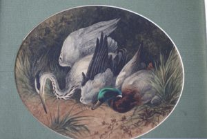 Heron and Mallard Kill - Charles E Britten Prints