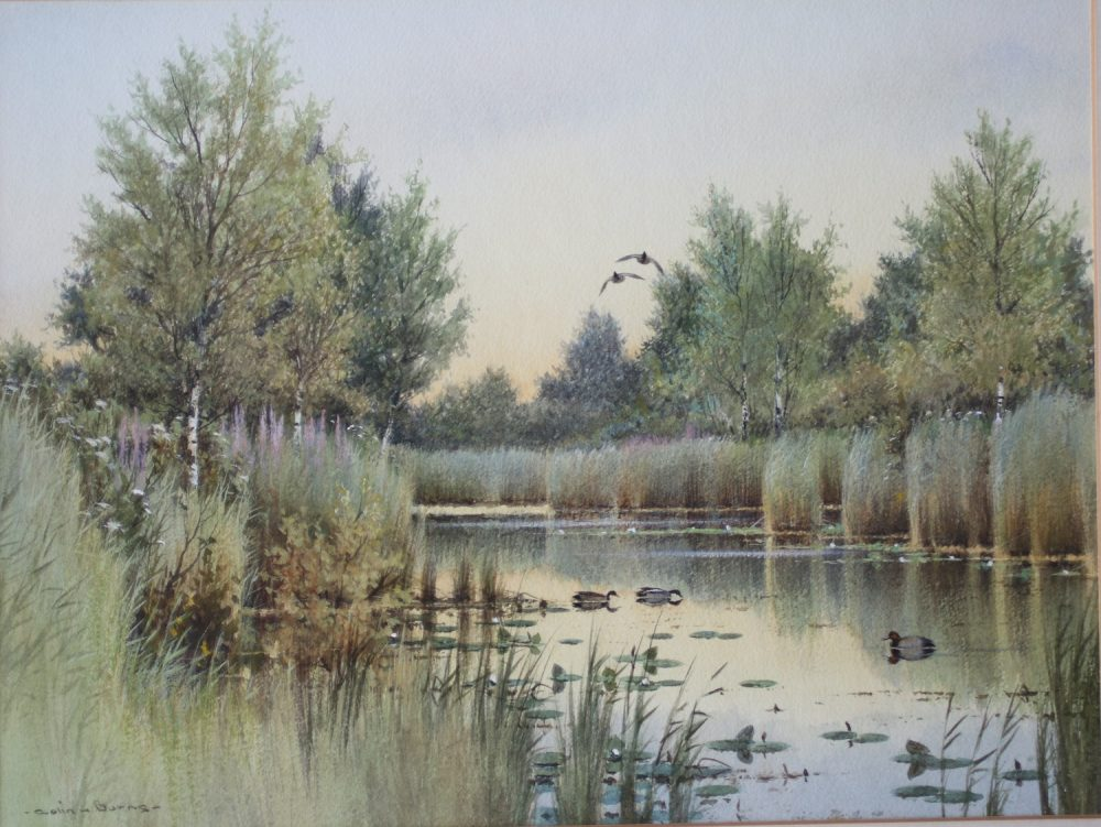 Fleet Dyke at Barton Broad - Colin Burns Watercolour