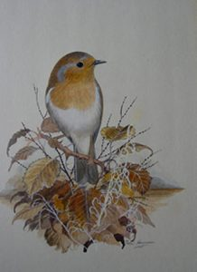 Robin on a branch Peter Hayman