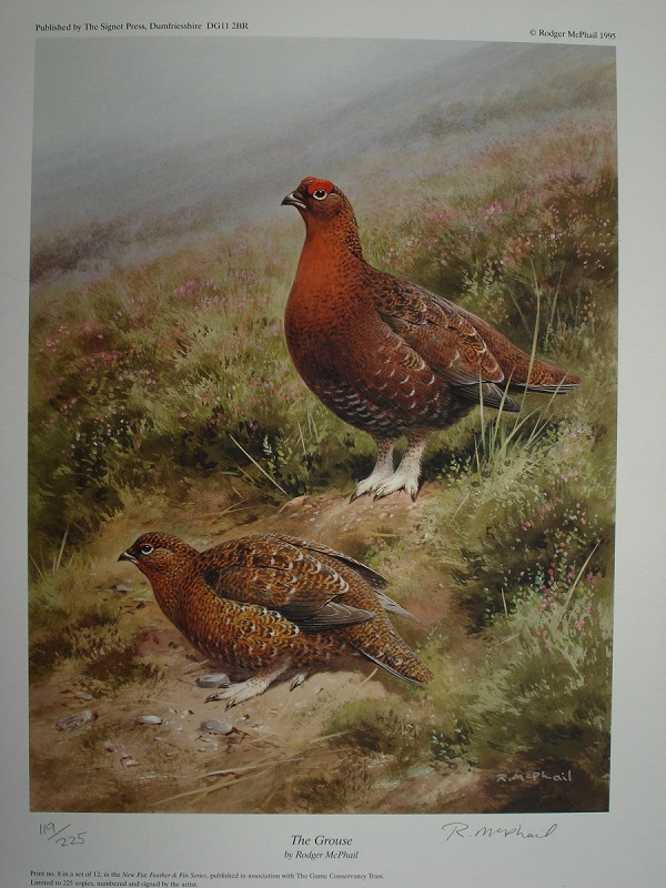 The Grouse - Rodger McPhail - Limited Edition Print