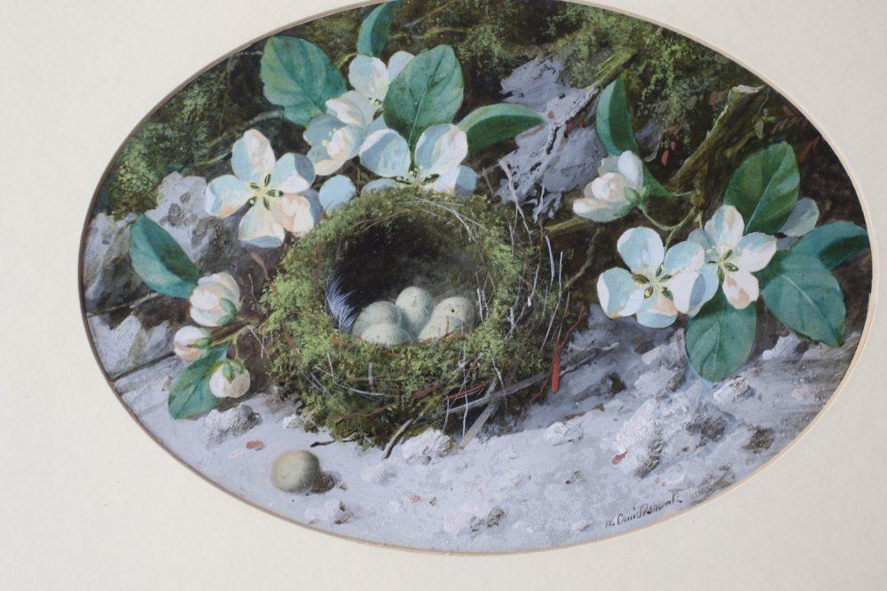 Birds Nest - W Cruickshank - watercolour