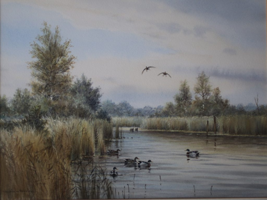 Mallards in the Fleet Dyke - Colin Burns - Watercolour