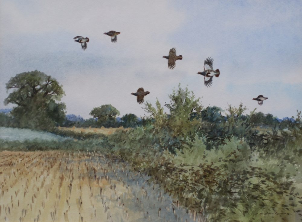 Partridge Drive Norfolk - Colin Burns - Watercolour