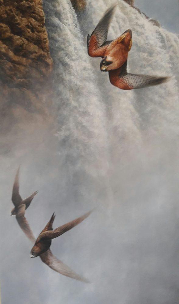 Andrew Ellis Falcon Swift - Acrylic