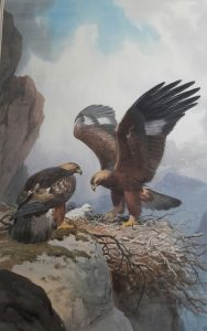 Golden Eagles JC Harrison