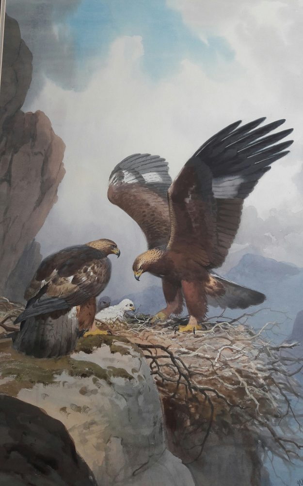 Golden Eagle with Young - John C Harrison - Watercolour