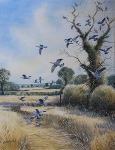 Simon Trinder Pigeons on Laid Corn