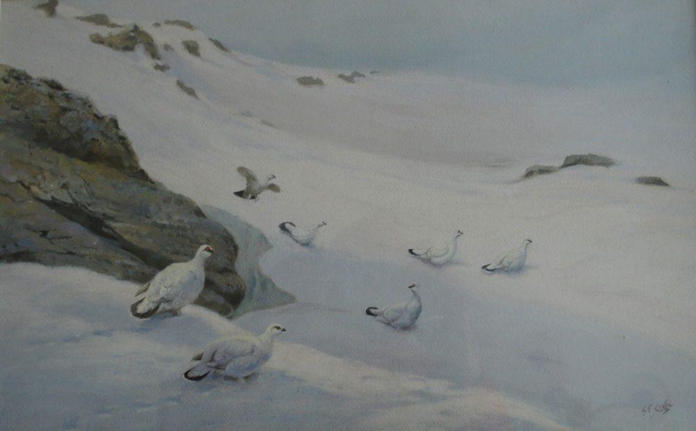 Ptarmigan in Winter - George E Lodge - Watercolour