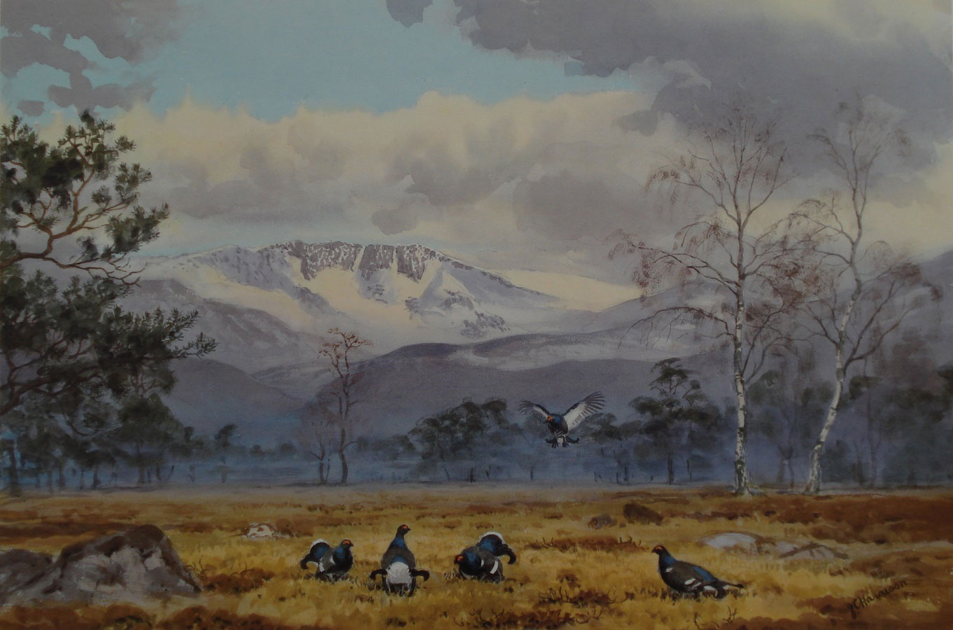 Black Grouse by John Cyril Harrison