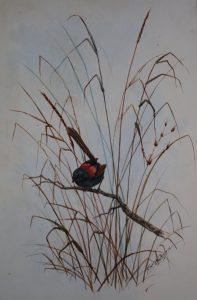 Australian Red Wren