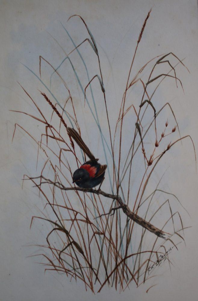 Red Wren (Australian) - Neville W Cayley - Watercolour