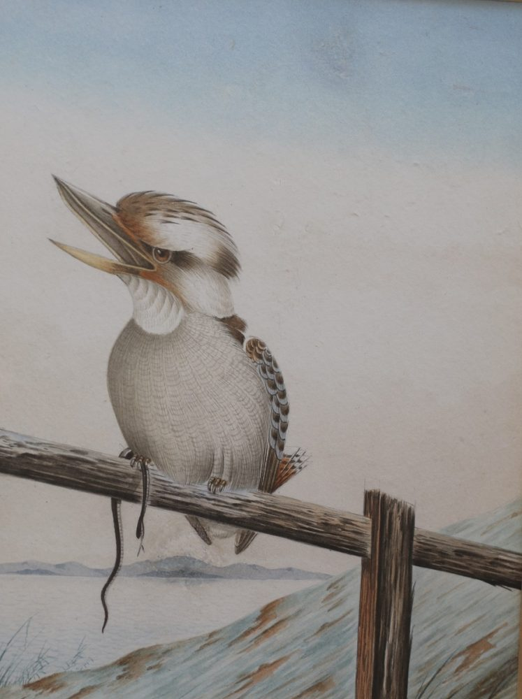 Kookaburra on a fence with a Snake - Neville W Cayley