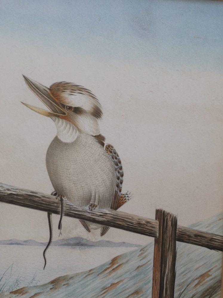 Kookaburra on a fence with a Snake - Neville W Cayley
