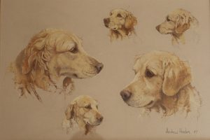 Golden Labrador by Andrew Haslen