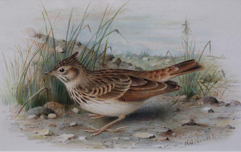 Woodlark (sold as pair) - Henrik Gronvold