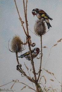 Goldfinches - Edwin Penny - Watercolour
