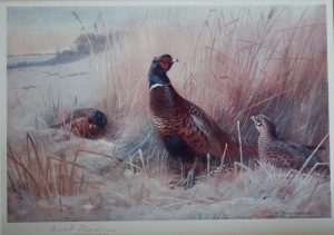 Pheasants in the Snow Limited Edition Print by Archibald Thorburn Print