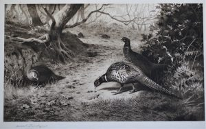 Pencil Signed Print of Pheasants - Archibald Thorburn