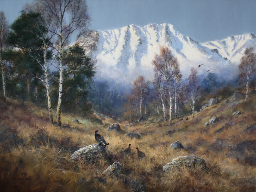 Black Grouse in Scotland - Colin Burns - Oil on Canvas
