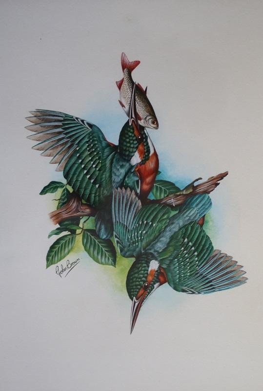 Kingfishers - John Brown