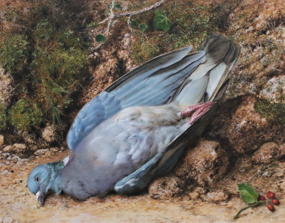 Dead Wood Pigeon watercolour painting by John Sherrin