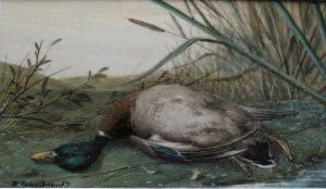 Dead Drake Mallard by William Cruickshank