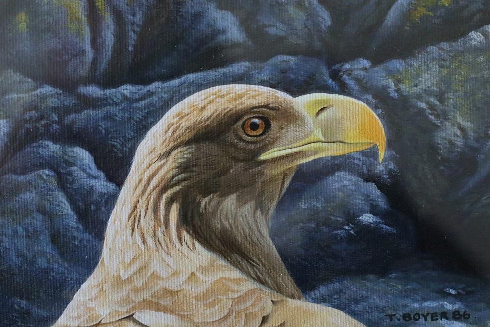 Sea Eagle - Head Study - Trevor Boyer